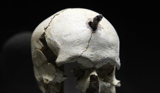 Crâne découvert à Ullastret (G. Bonnefont)